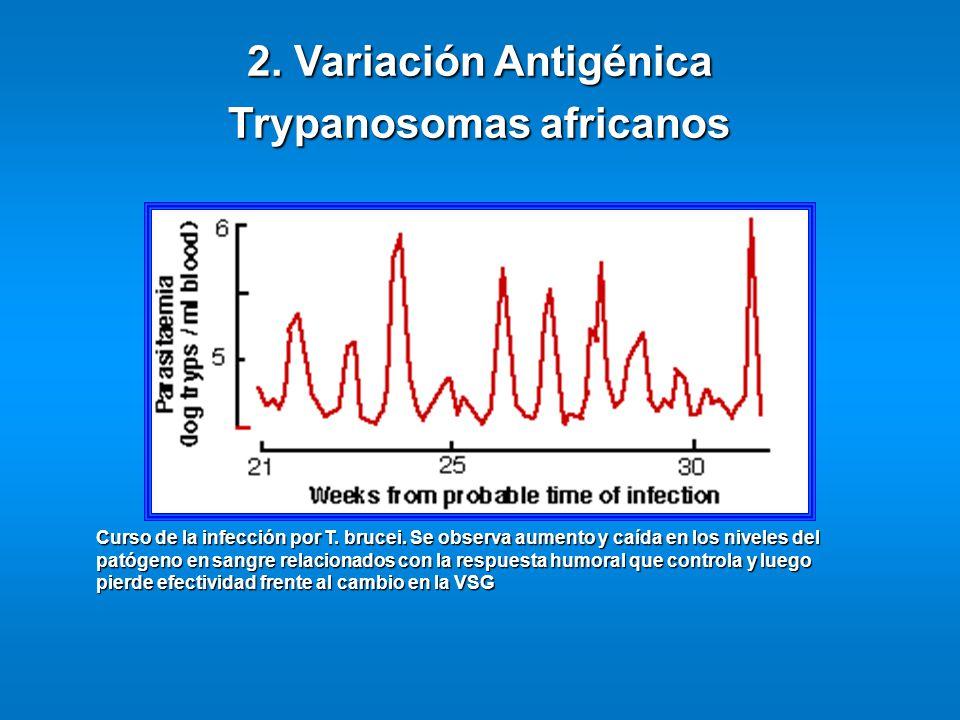 2. Variación Antigénica Trypanosomas africanos Curso de la infección por T. brucei. Se observa aumento y caída en los niveles del patógeno en sangre r