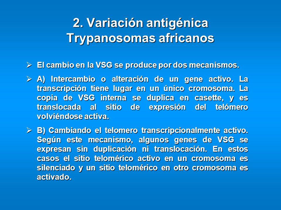 2. Variación antigénica Trypanosomas africanos El cambio en la VSG se produce por dos mecanismos. El cambio en la VSG se produce por dos mecanismos. A