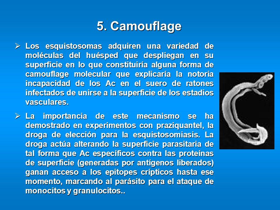 5. Camouflage Los esquistosomas adquiren una variedad de moléculas del huésped que despliegan en su superficie en lo que constituiría alguna forma de
