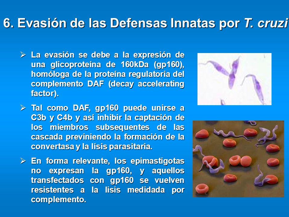 La evasión se debe a la expresión de una glicoproteína de 160kDa (gp160), homóloga de la proteína regulatoria del complemento DAF (decay accelerating