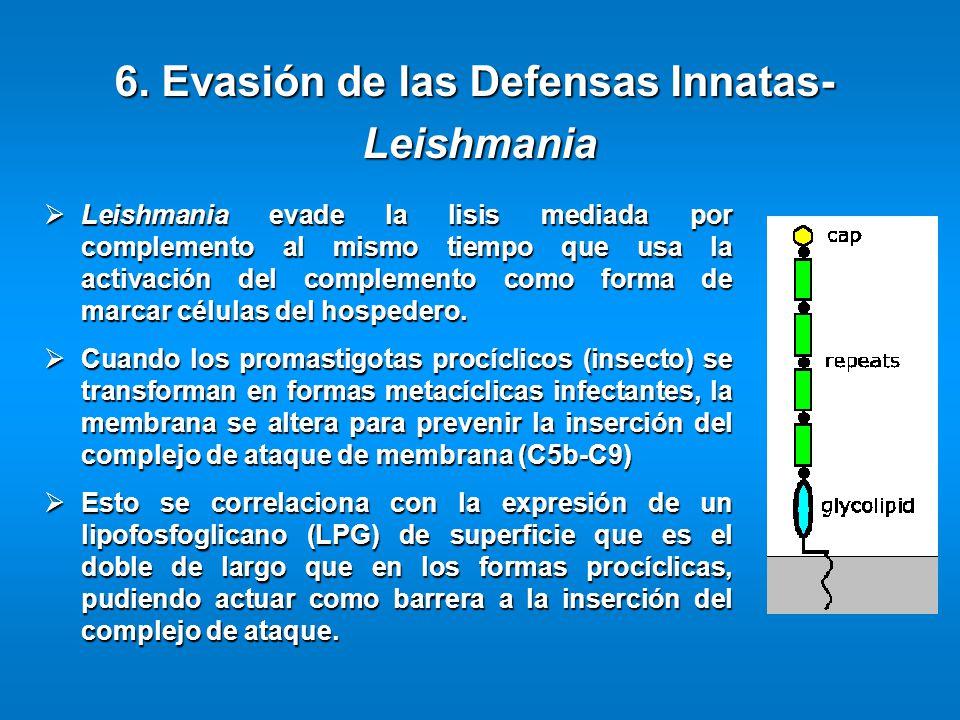 Leishmania evade la lisis mediada por complemento al mismo tiempo que usa la activación del complemento como forma de marcar células del hospedero. Le