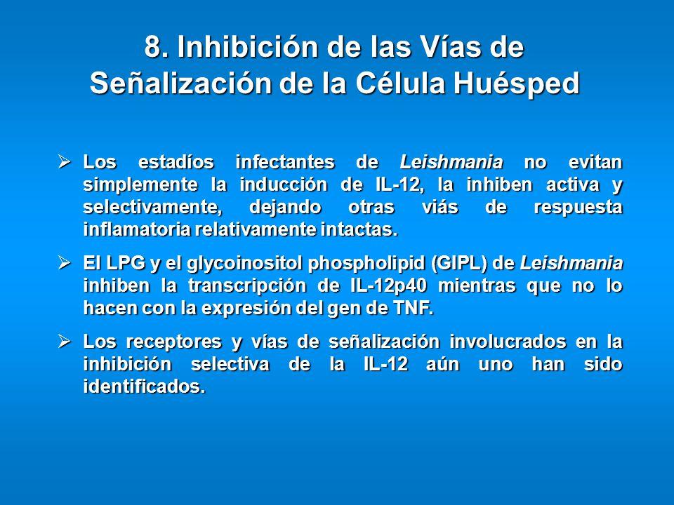 Los estadíos infectantes de Leishmania no evitan simplemente la inducción de IL-12, la inhiben activa y selectivamente, dejando otras viás de respuest