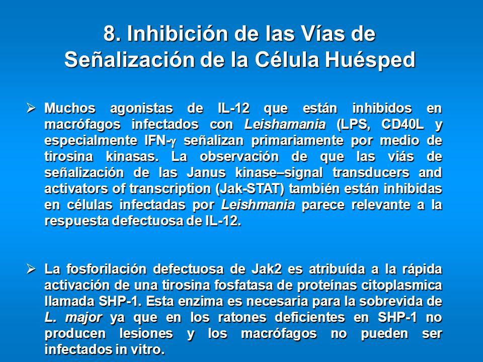 Muchos agonistas de IL-12 que están inhibidos en macrófagos infectados con Leishamania (LPS, CD40L y especialmente IFN- señalizan primariamente por me