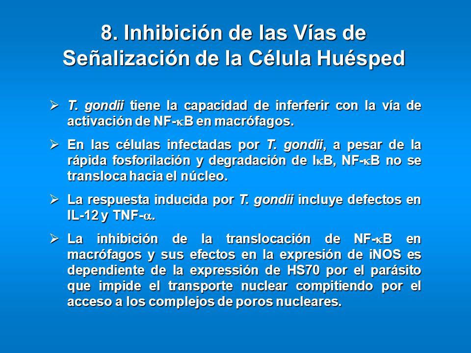 T. gondii tiene la capacidad de inferferir con la vía de activación de NF- B en macrófagos. T. gondii tiene la capacidad de inferferir con la vía de a