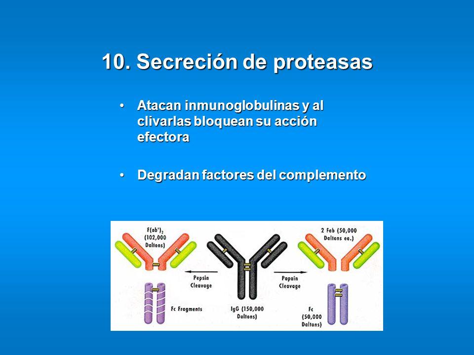 10. Secreción de proteasas Atacan inmunoglobulinas y al clivarlas bloquean su acción efectoraAtacan inmunoglobulinas y al clivarlas bloquean su acción