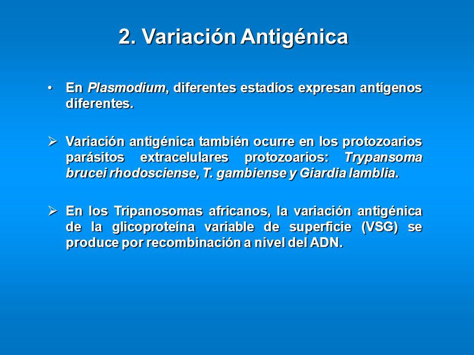 En Plasmodium, diferentes estadíos expresan antígenos diferentes.En Plasmodium, diferentes estadíos expresan antígenos diferentes. Variación antigénic