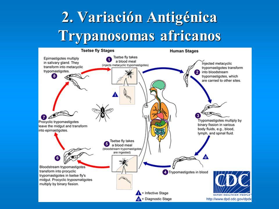 2. Variación Antigénica Trypanosomas africanos