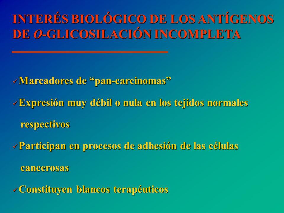 INTERÉS BIOLÓGICO DE LOS ANTÍGENOS DE O-GLICOSILACIÓN INCOMPLETA Marcadores de pan-carcinomas Marcadores de pan-carcinomas Expresión muy débil o nula en los tejidos normales Expresión muy débil o nula en los tejidos normales respectivos respectivos Participan en procesos de adhesión de las células Participan en procesos de adhesión de las células cancerosas cancerosas Constituyen blancos terapéuticos Constituyen blancos terapéuticos