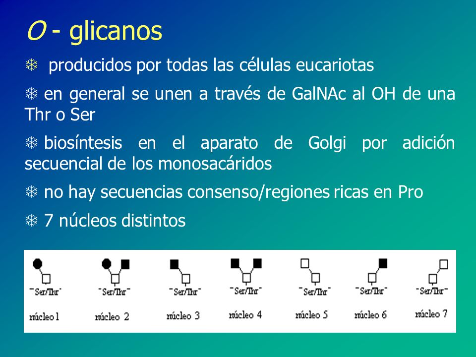 T O- glicoproteínas en el glicocalix de las cercarias - altamente fucosiladas, presentan múltiples copias de lacdiNAc (GalNAc 1- 4GlcNAc), Gal -ligada T Los motivos multifucosilados serían responsables de la acción moduladora del sistema inmune