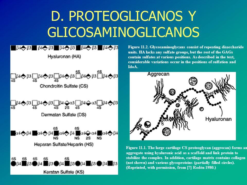 Coexpresión de sTn en gpTn Antígeno Tn PROTOESCOLEX ADULTOS Antígeno sialil-Tn PROTOESCOLEX ADULTOS ANTÍGENOS Tn Y STn EN Echinococcus granulosus
