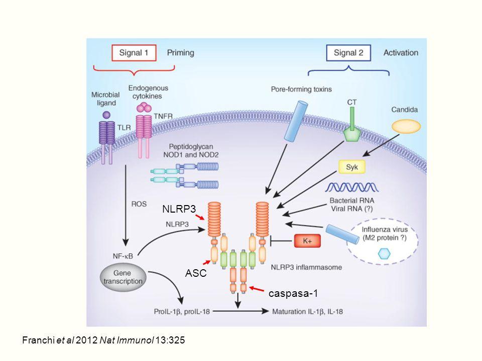 Franchi et al 2012 Nat Immunol 13:325 NLRP3 ASC caspasa-1