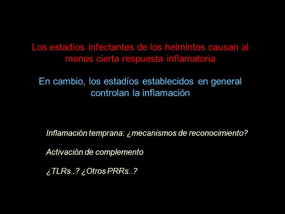 Los estadíos infectantes de los helmintos causan al menos cierta respuesta inflamatoria En cambio, los estadíos establecidos en general controlan la inflamación Inflamación temprana: ¿mecanismos de reconocimiento.