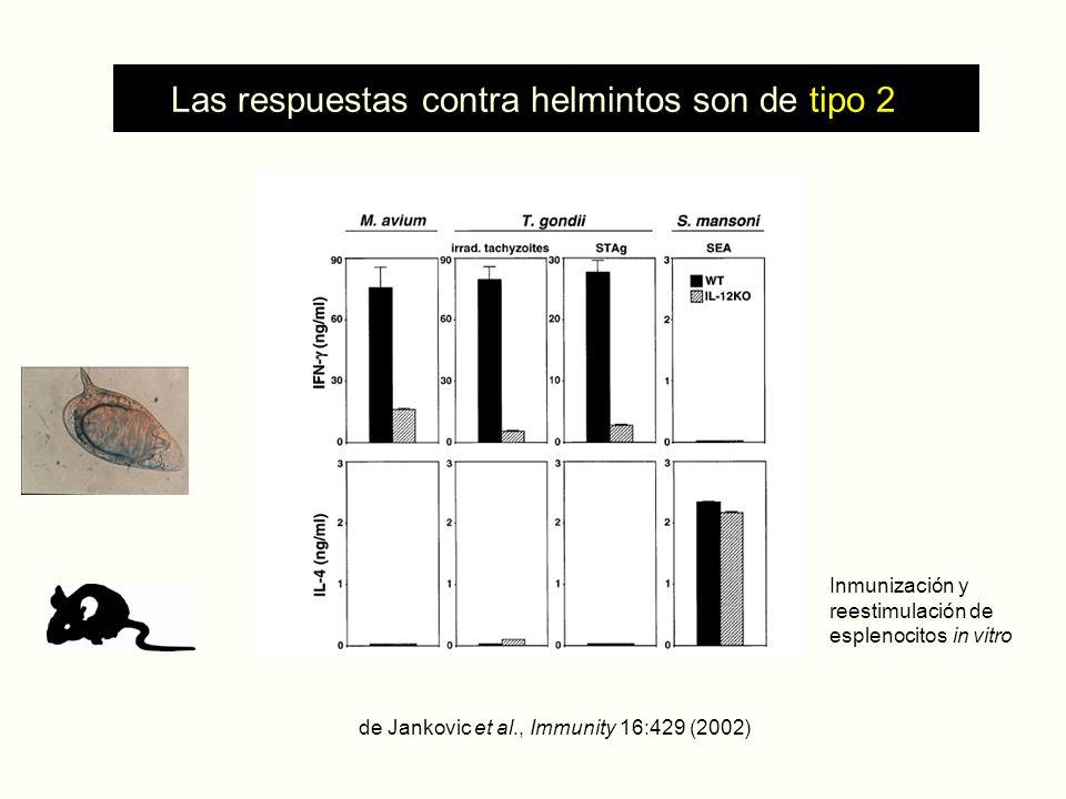 Las respuestas contra helmintos son de tipo 2 de Jankovic et al., Immunity 16:429 (2002) Inmunización y reestimulación de esplenocitos in vitro