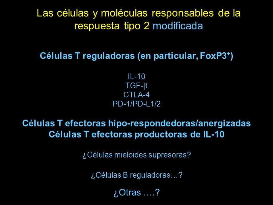 Las células y moléculas responsables de la respuesta tipo 2 modificada Células T reguladoras (en particular, FoxP3 + ) IL-10 TGF- CTLA-4 PD-1/PD-L1/2 Células T efectoras hipo-respondedoras/anergizadas Células T efectoras productoras de IL-10 ¿Células mieloides supresoras.