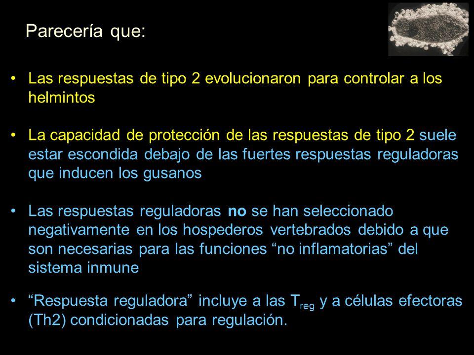 Parecería que: Las respuestas de tipo 2 evolucionaron para controlar a los helmintos La capacidad de protección de las respuestas de tipo 2 suele estar escondida debajo de las fuertes respuestas reguladoras que inducen los gusanos Las respuestas reguladoras no se han seleccionado negativamente en los hospederos vertebrados debido a que son necesarias para las funciones no inflamatorias del sistema inmune Respuesta reguladora incluye a las T reg y a células efectoras (Th2) condicionadas para regulación.