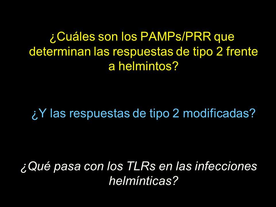 ¿Cuáles son los PAMPs/PRR que determinan las respuestas de tipo 2 frente a helmintos.