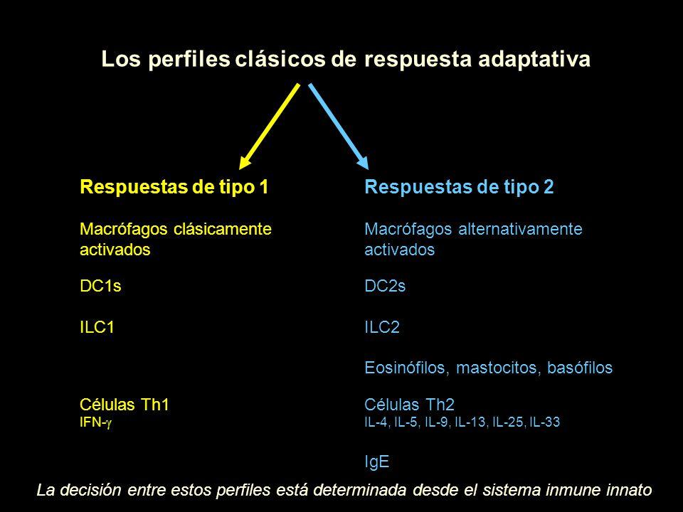Respuestas de tipo 1 Macrófagos clásicamente activados DC1s ILC1 Células Th1 IFN- Respuestas de tipo 2 Macrófagos alternativamente activados DC2s ILC2 Eosinófilos, mastocitos, basófilos Células Th2 IL-4, IL-5, IL-9, IL-13, IL-25, IL-33 IgE Los perfiles clásicos de respuesta adaptativa La decisión entre estos perfiles está determinada desde el sistema inmune innato