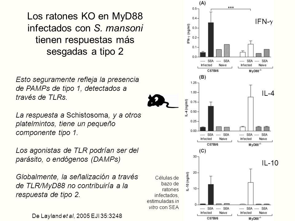 Los ratones KO en MyD88 infectados con S.