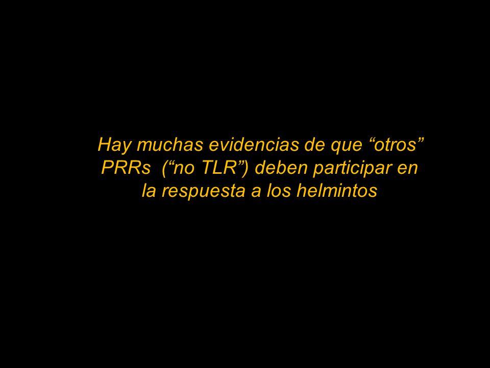 Hay muchas evidencias de que otros PRRs (no TLR) deben participar en la respuesta a los helmintos