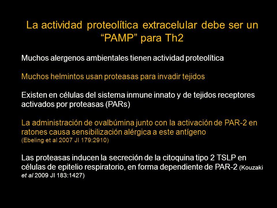 La actividad proteolítica extracelular debe ser un PAMP para Th2 Muchos alergenos ambientales tienen actividad proteolítica Muchos helmintos usan proteasas para invadir tejidos Existen en células del sistema inmune innato y de tejidos receptores activados por proteasas (PARs) La administración de ovalbúmina junto con la activación de PAR-2 en ratones causa sensibilización alérgica a este antígeno (Ebeling et al 2007 JI 179:2910) Las proteasas inducen la secreción de la citoquina tipo 2 TSLP en células de epitelio respiratorio, en forma dependiente de PAR-2 (Kouzaki et al 2009 JI 183:1427)