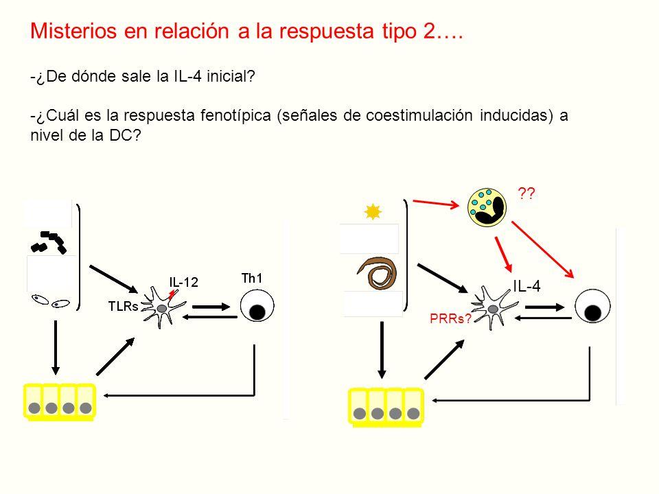 PRRs.IL-4 Misterios en relación a la respuesta tipo 2….