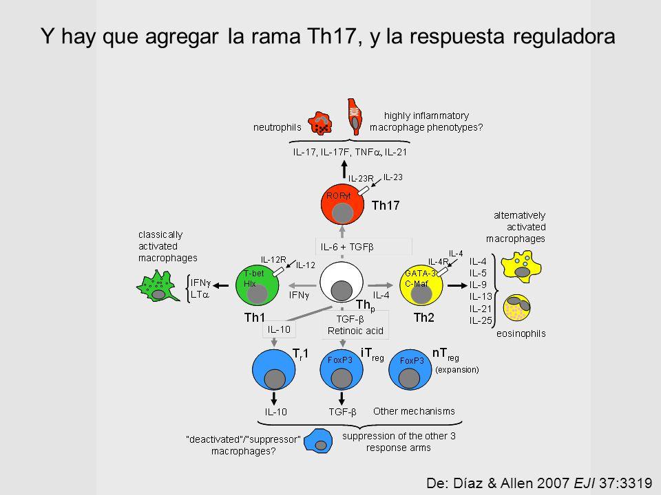 De: Díaz & Allen 2007 EJI 37:3319 Y hay que agregar la rama Th17, y la respuesta reguladora