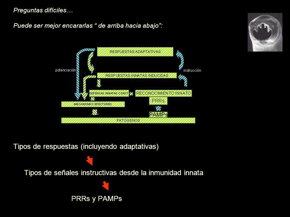 Preguntas difíciles… Puede ser mejor encararlas de arriba hacia abajo: Tipos de respuestas (incluyendo adaptativas) Tipos de señales instructivas desde la inmunidad innata PRRs y PAMPs