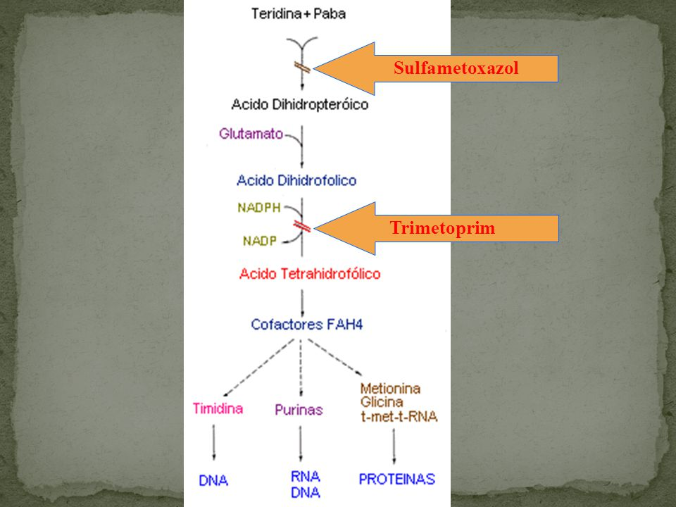TrimetoprimSulfametoxazol