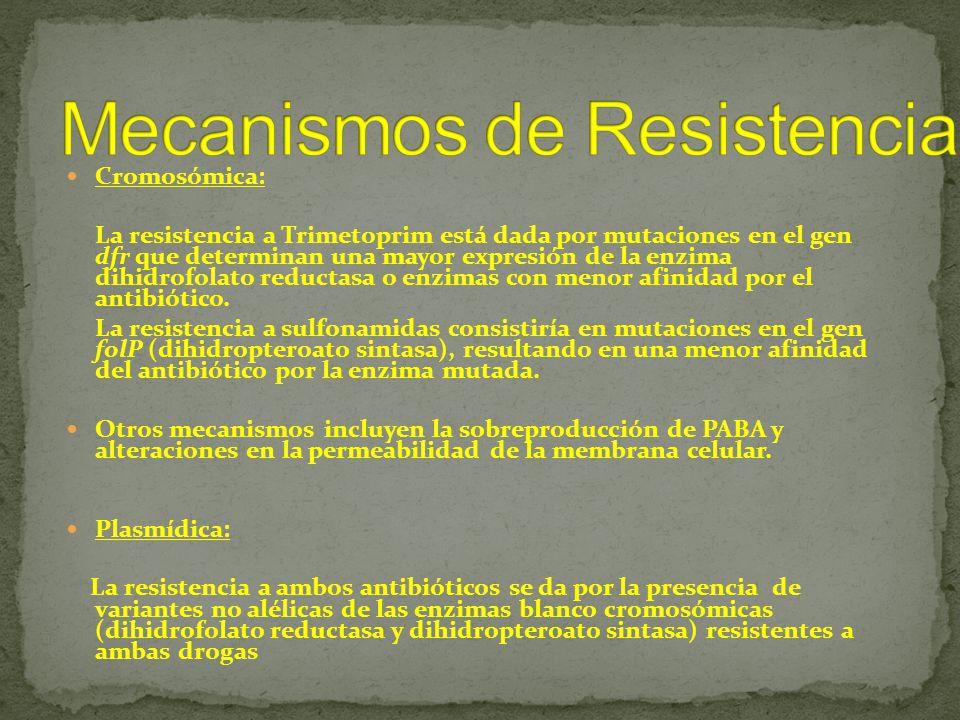 Cromosómica: La resistencia a Trimetoprim está dada por mutaciones en el gen dfr que determinan una mayor expresión de la enzima dihidrofolato reducta