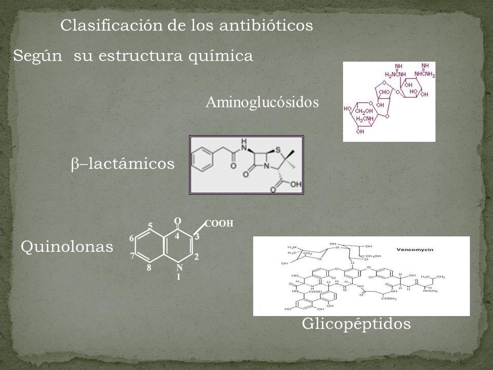 Clasificación de los antibióticos Según su estructura química Aminoglucósidos lactámicos Quinolonas Glicopéptidos