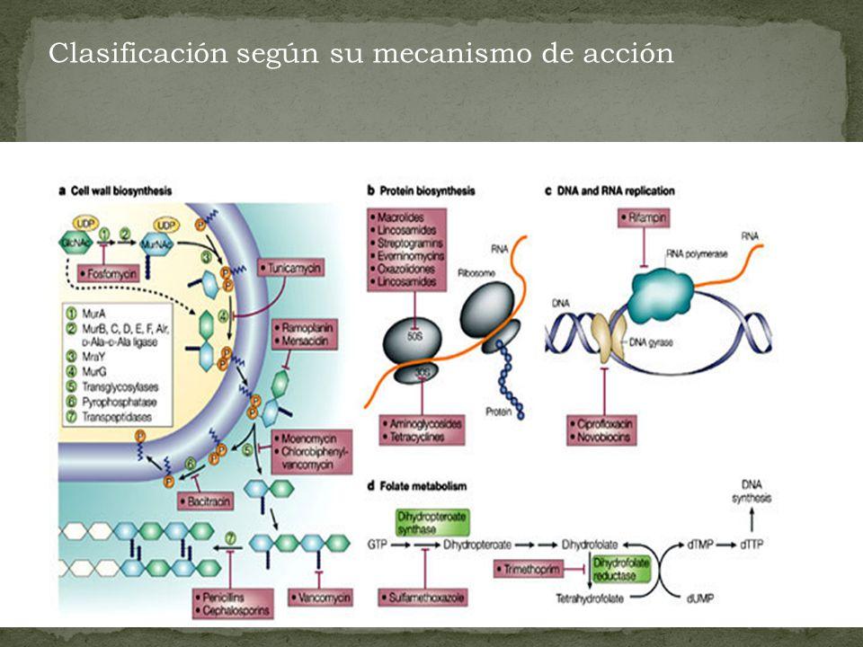 Clasificación según su mecanismo de acción