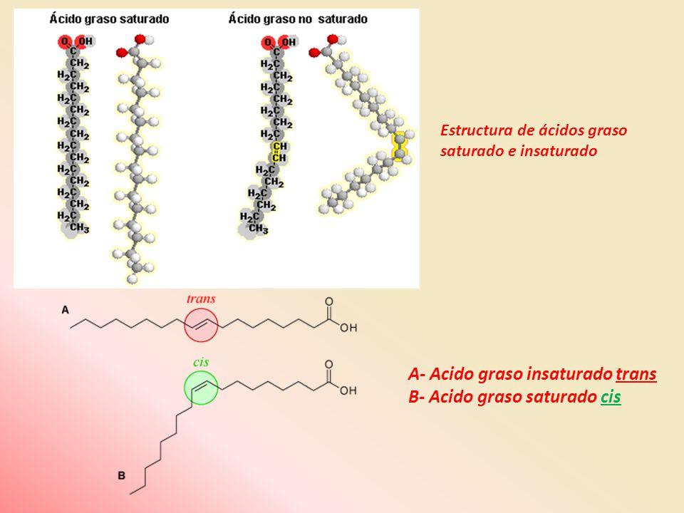 A- Acido graso insaturado trans B- Acido graso saturado cis Estructura de ácidos graso saturado e insaturado