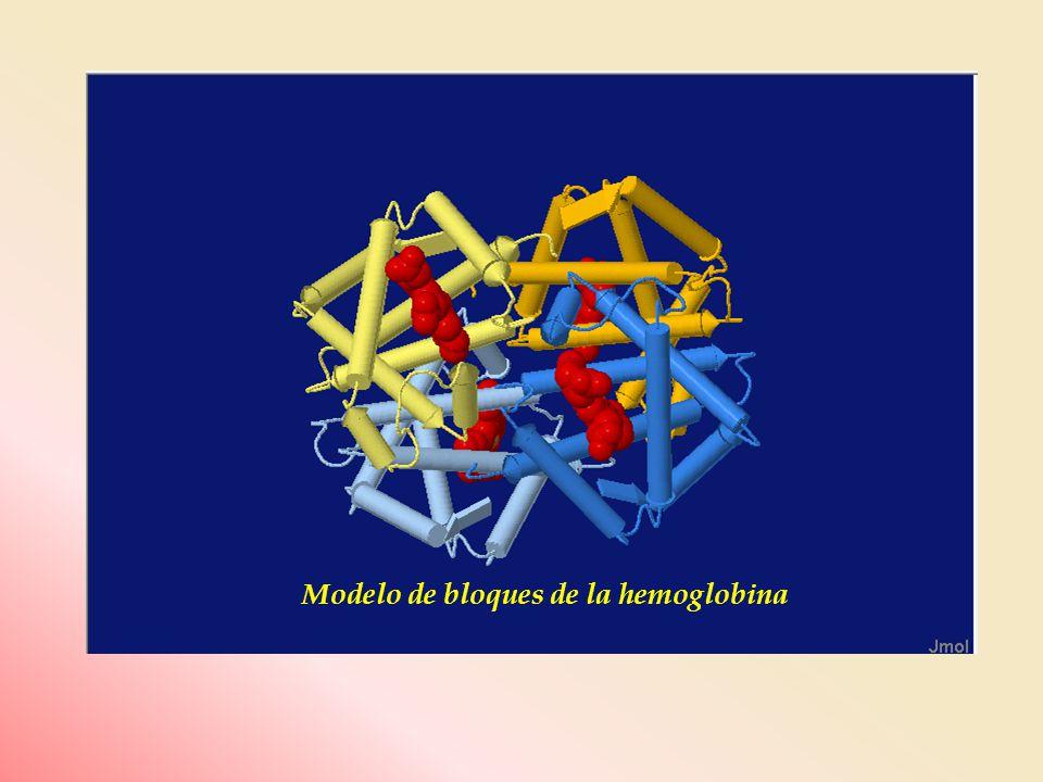 Modelo de bloques de la hemoglobina