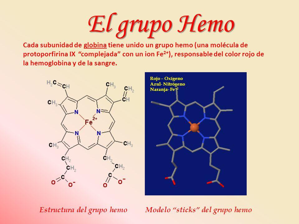 Estructura del grupo hemoModelo sticks del grupo hemo Cada subunidad de globina tiene unido un grupo hemo (una molécula de protoporfirina IX complejad