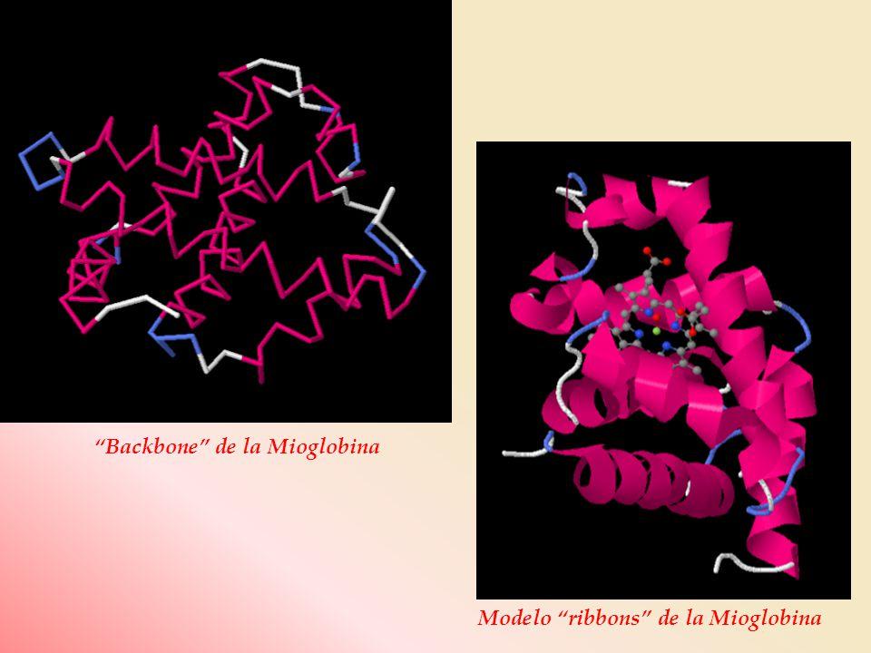 Backbone de la Mioglobina Modelo ribbons de la Mioglobina