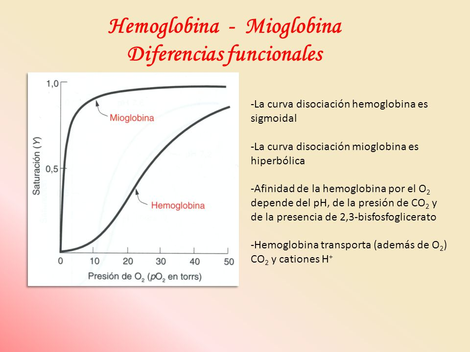 Hemoglobina - Mioglobina Diferencias funcionales -La curva disociación hemoglobina es sigmoidal -La curva disociación mioglobina es hiperbólica -Afini