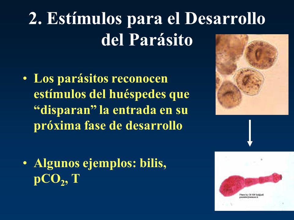 2. Estímulos para el Desarrollo del Parásito Los parásitos reconocen estímulos del huéspedes que disparan la entrada en su próxima fase de desarrollo