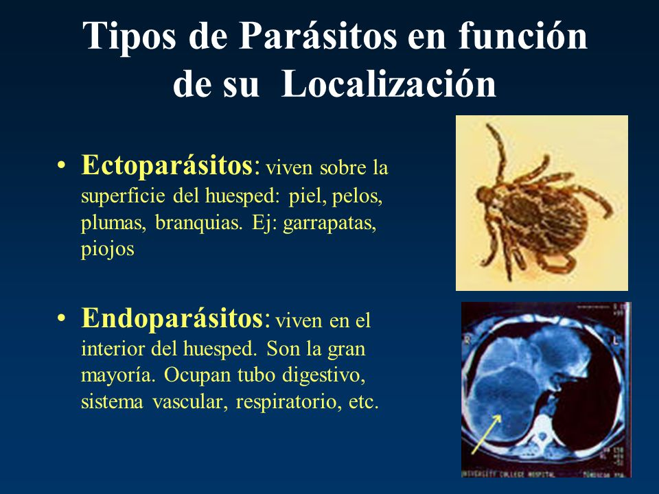Tipos de Parásitos en función de su Localización Ectoparásitos: viven sobre la superficie del huesped: piel, pelos, plumas, branquias. Ej: garrapatas,
