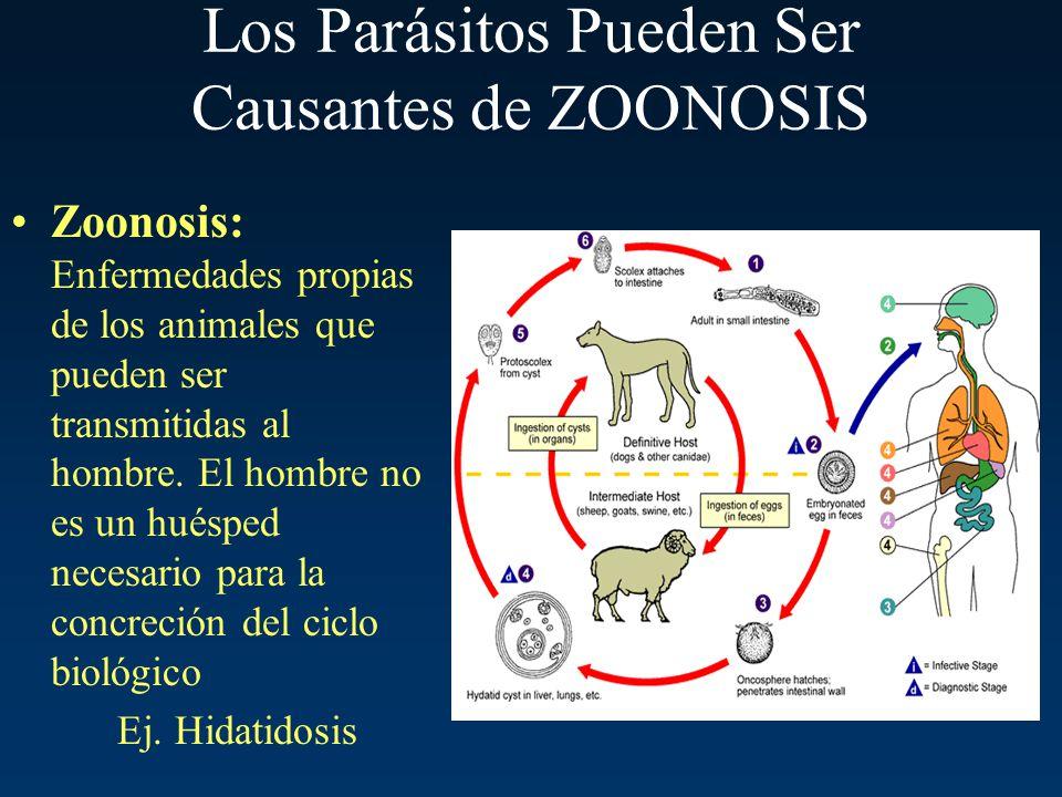 Los Parásitos Pueden Ser Causantes de ZOONOSIS Zoonosis: Enfermedades propias de los animales que pueden ser transmitidas al hombre. El hombre no es u