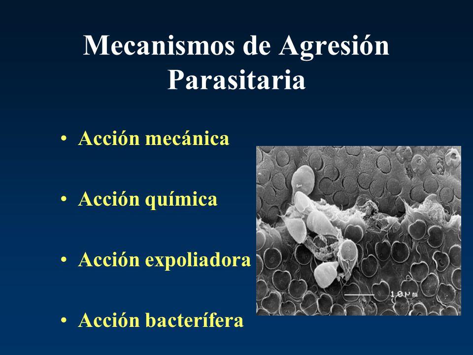 Mecanismos de Agresión Parasitaria Acción mecánica Acción química Acción expoliadora Acción bacterífera