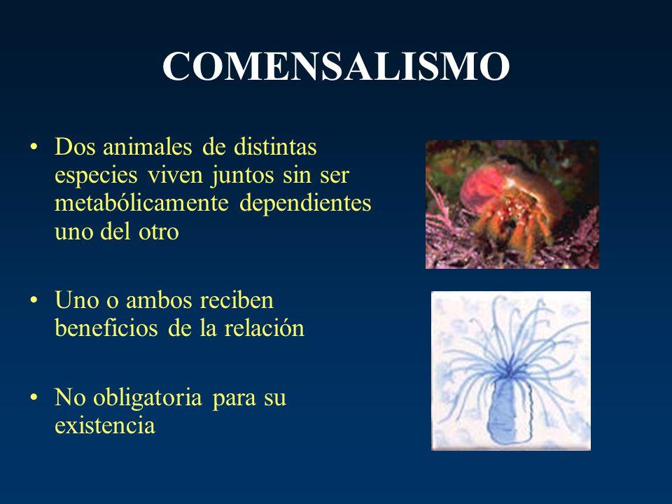 COMENSALISMO Dos animales de distintas especies viven juntos sin ser metabólicamente dependientes uno del otro Uno o ambos reciben beneficios de la re