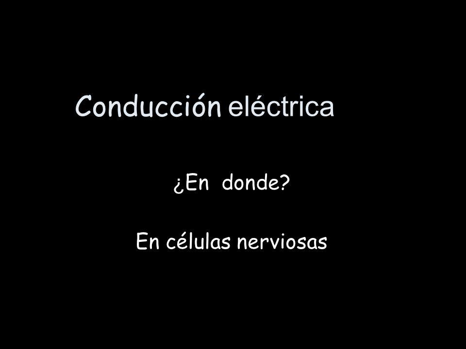 Conducción eléctrica ¿ En donde? En células nerviosas