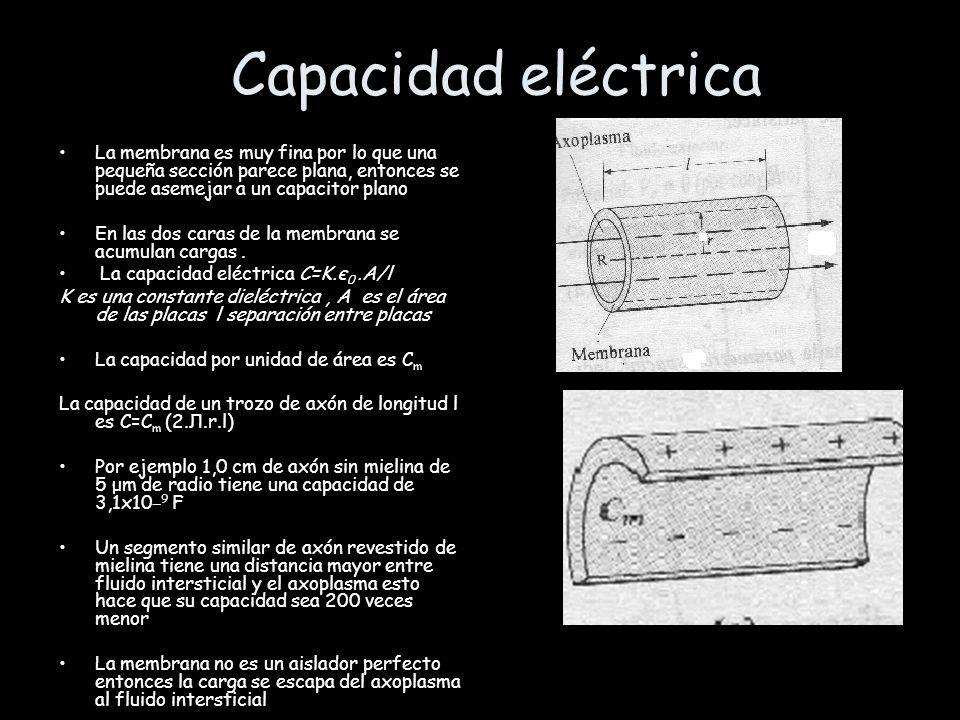Capacidad eléctrica La membrana es muy fina por lo que una pequeña sección parece plana, entonces se puede asemejar a un capacitor plano En las dos ca