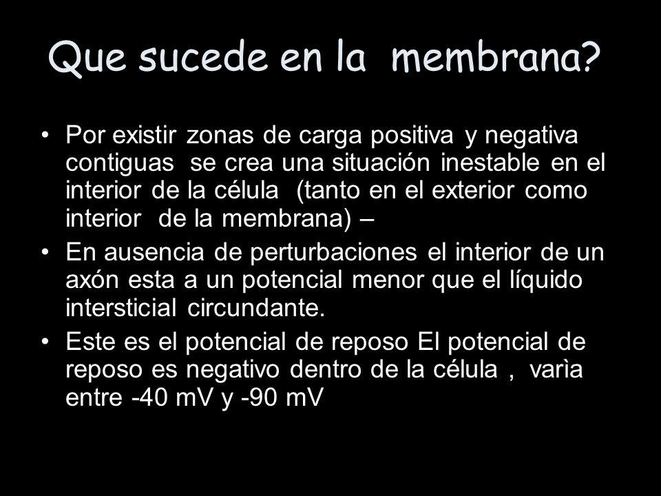 Que sucede en la membrana? Por existir zonas de carga positiva y negativa contiguas se crea una situación inestable en el interior de la célula (tanto