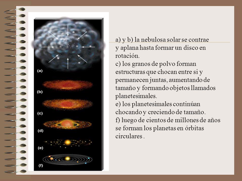 a) y b) la nebulosa solar se contrae y aplana hasta formar un disco en rotación. c) los granos de polvo forman estructuras que chocan entre si y perma
