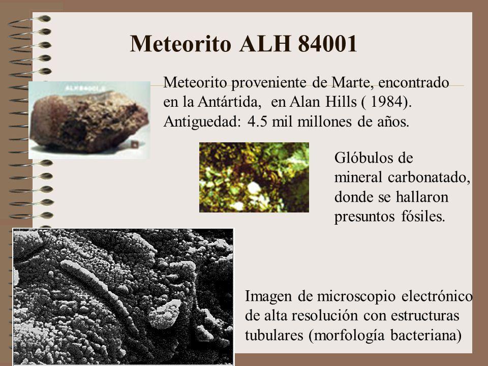 Meteorito ALH 84001 Meteorito proveniente de Marte, encontrado en la Antártida, en Alan Hills ( 1984). Antiguedad: 4.5 mil millones de años. Glóbulos