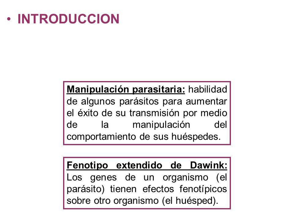INTRODUCCION Manipulación parasitaria: habilidad de algunos parásitos para aumentar el éxito de su transmisión por medio de la manipulación del comportamiento de sus huéspedes.