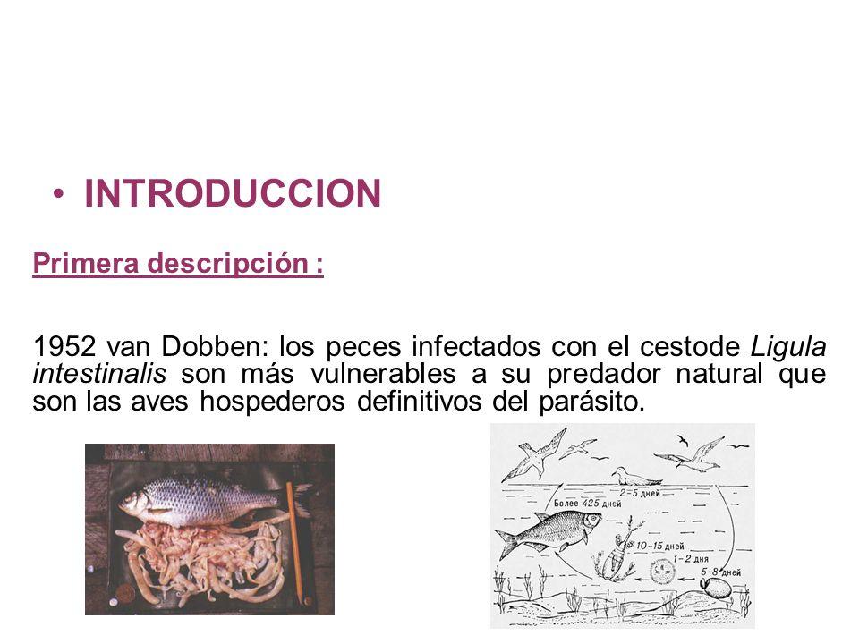 INTRODUCCION Primera descripción : 1952 van Dobben: los peces infectados con el cestode Ligula intestinalis son más vulnerables a su predador natural que son las aves hospederos definitivos del parásito.