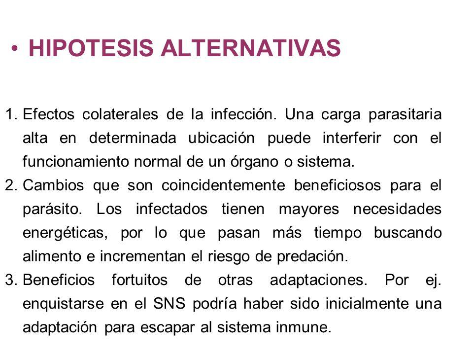 HIPOTESIS ALTERNATIVAS 1.Efectos colaterales de la infección. Una carga parasitaria alta en determinada ubicación puede interferir con el funcionamien