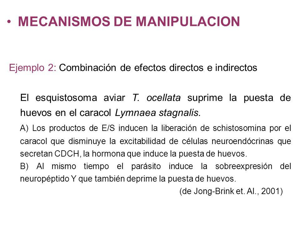 MECANISMOS DE MANIPULACION Ejemplo 2: Combinación de efectos directos e indirectos El esquistosoma aviar T. ocellata suprime la puesta de huevos en el